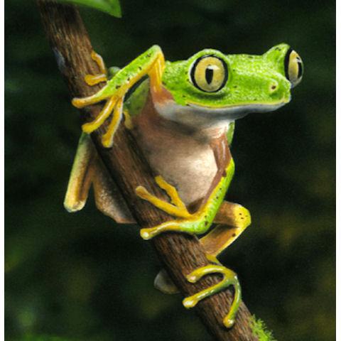 Nice Sponsor A Frog